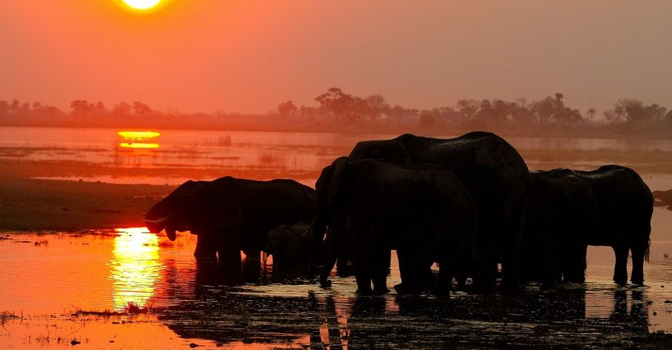 Chobe camping safari
