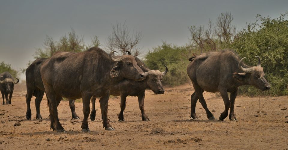 Chobe okavango kwando