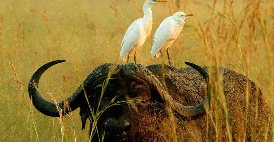 Four rivers safari
