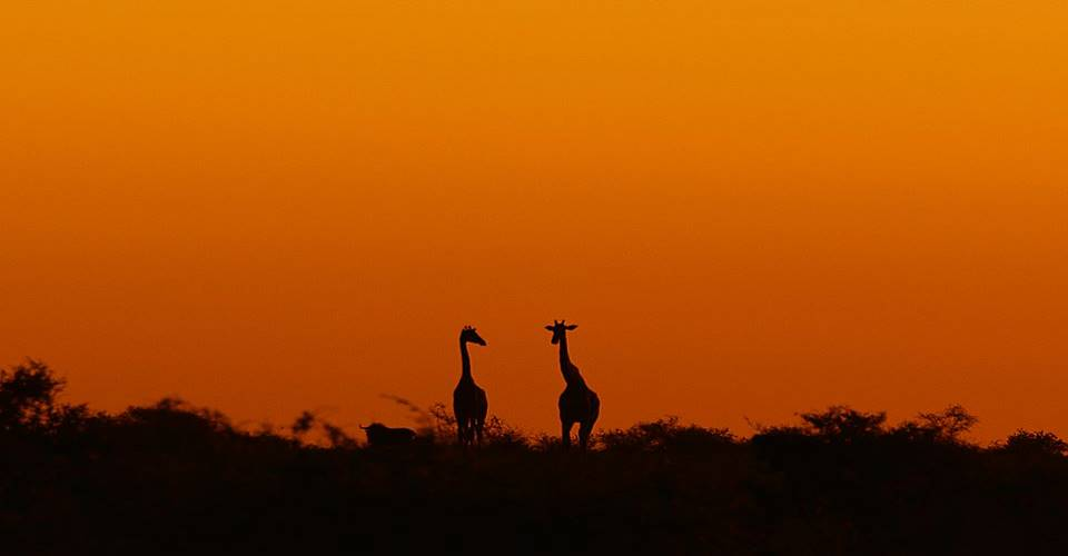 Maun Livingstone Camping Safari