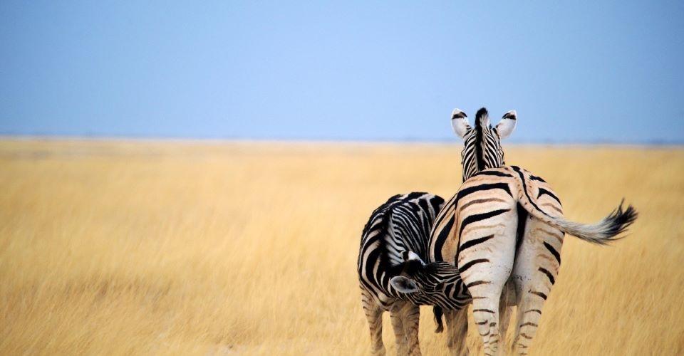 Wings over botswana safari