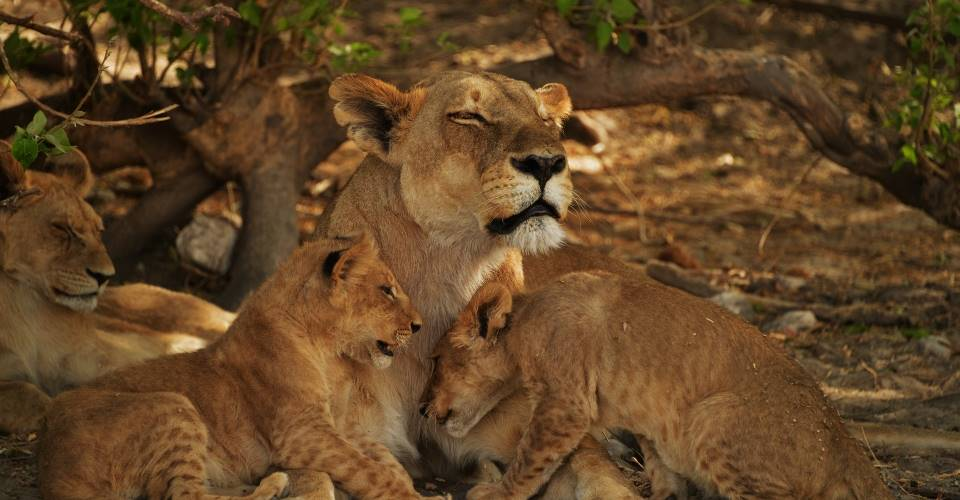 okavango moremi savuti camping safari