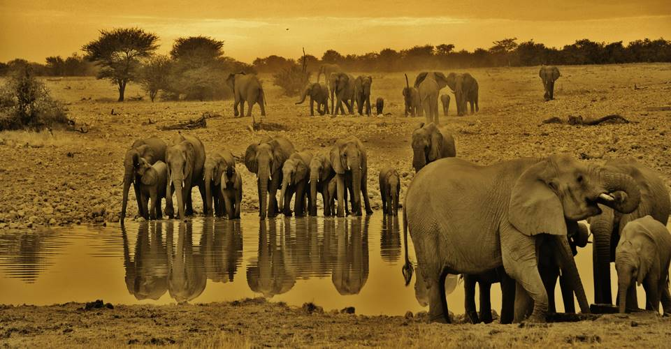 Etosha Photographic safaris