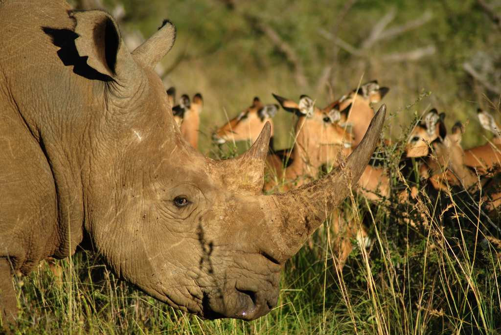 Black-Rhino-Game-Lodge