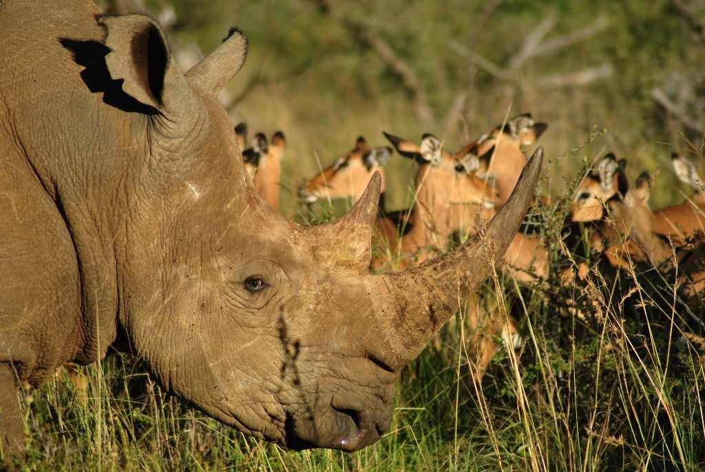 Black-Rhino-Game-Lodge