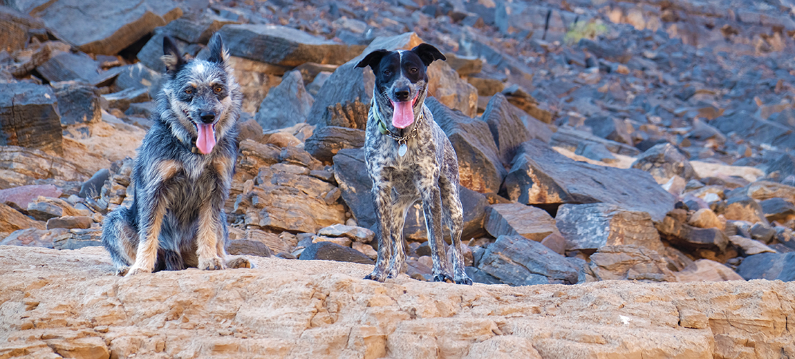 camp dogs richtersveld hiking